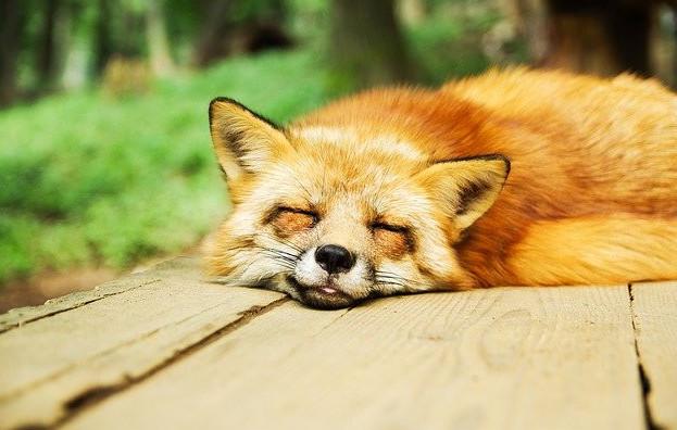 the sleep state optimal
