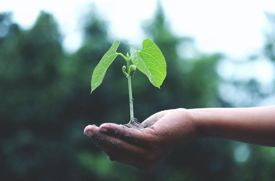 Grow like good weed