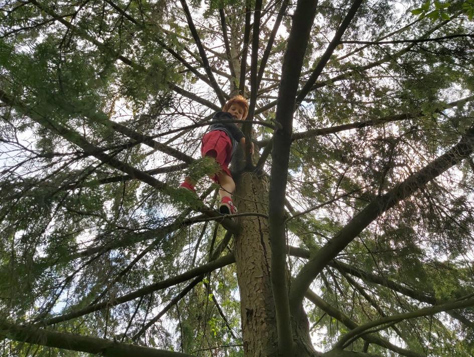 The tree climbing monkey understands his identity