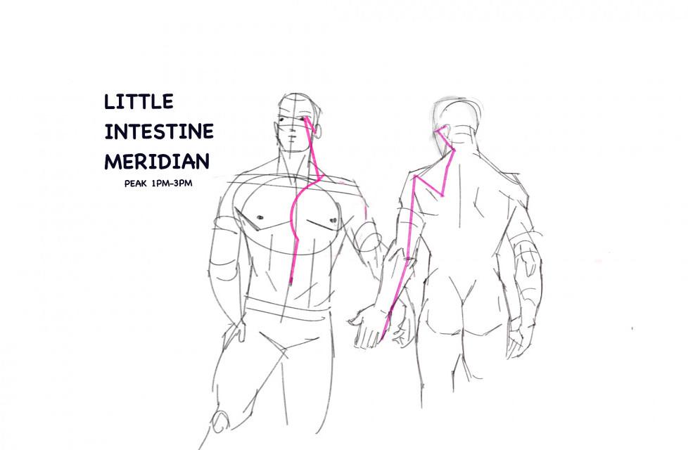 The little intestine meridian