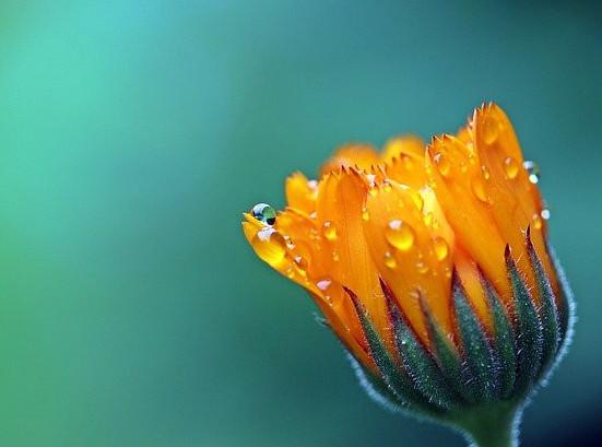 The sacral orange
