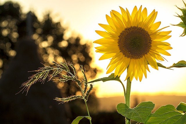 Solar sunshine centre