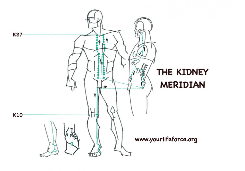 The kidney meridian trace