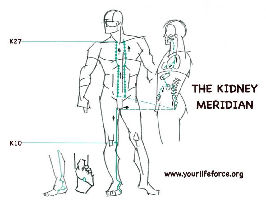 The kidney meridian