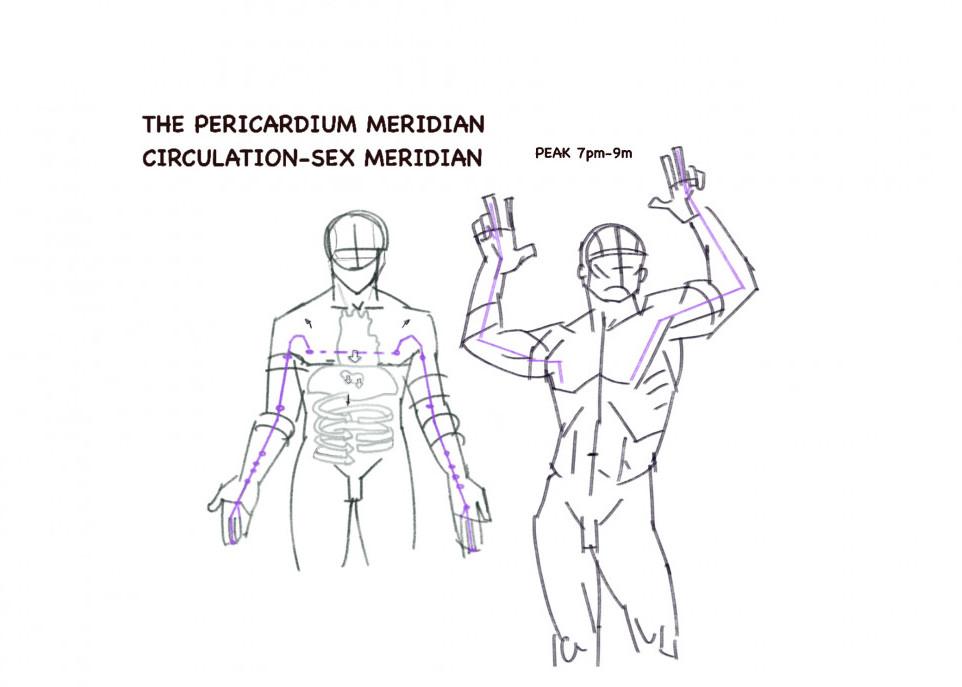 The pericardium meridian