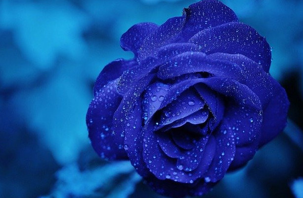 Bloom in blue with the throat chakra healing