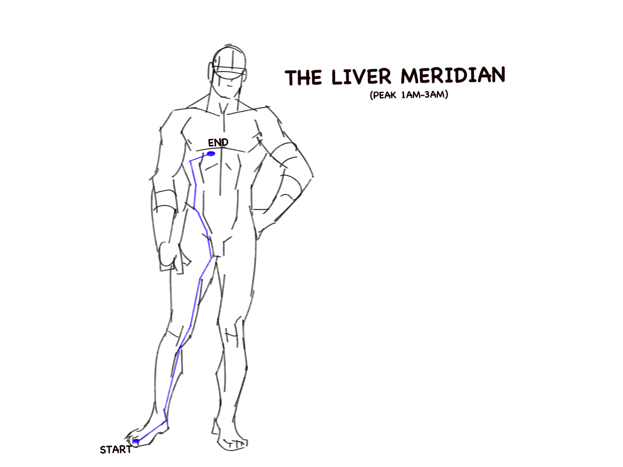 The liver meridian