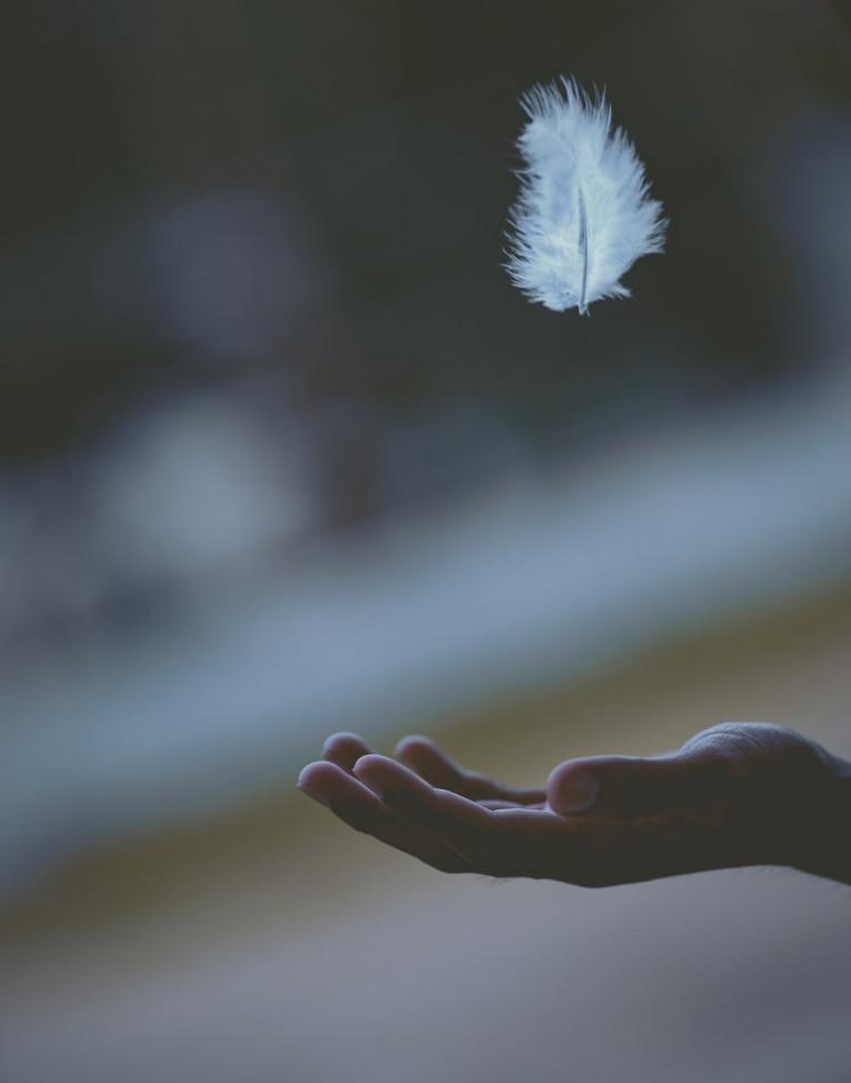 Catch the peace
