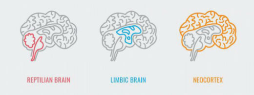 The limbic brain system