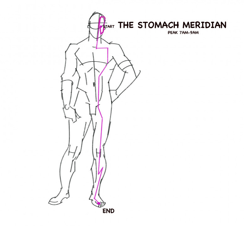 The stomach meridian